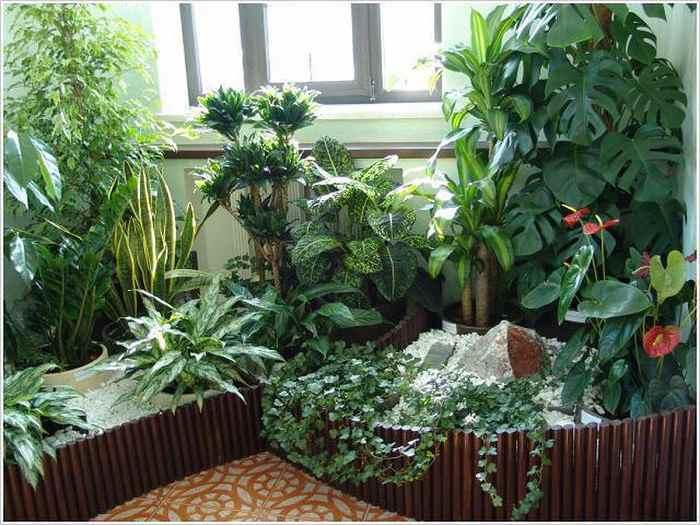 Комнатные растения и женское здоровье
