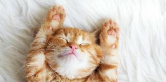 Здоровый сон за 4-5 часов