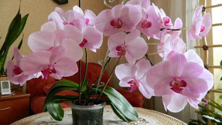 Чтобы орхидеи цвели 3 раза в год