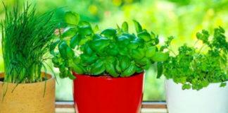 8 трав и пряностей, которые легко вырастить на кухне