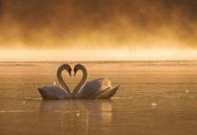 Как определить, это любовь или влюбленность