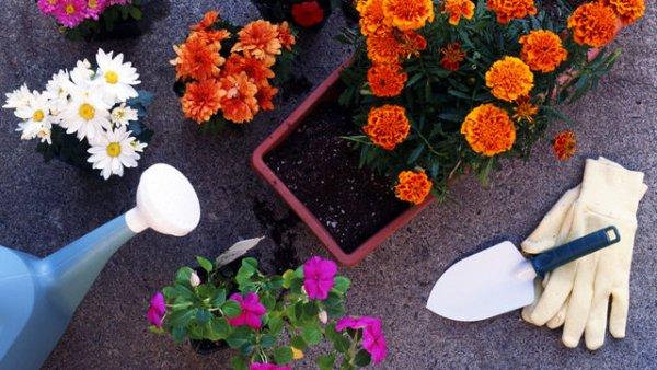 Луковый коктейль для цветов