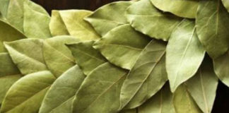 Она разложила сухие листья по всем углам дома