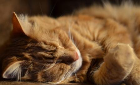 Спать таким образом смертельно опасно