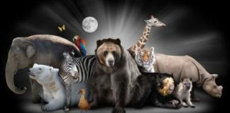 5 полезных качеств, которым можно научится у животных