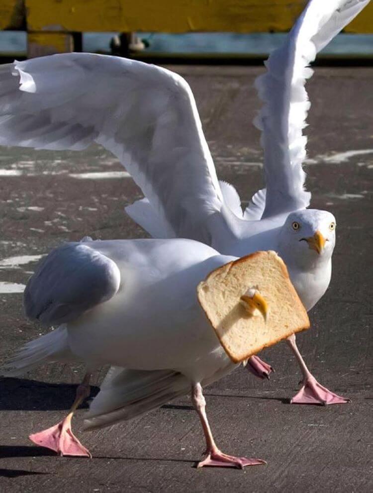 картинки приколы птиц