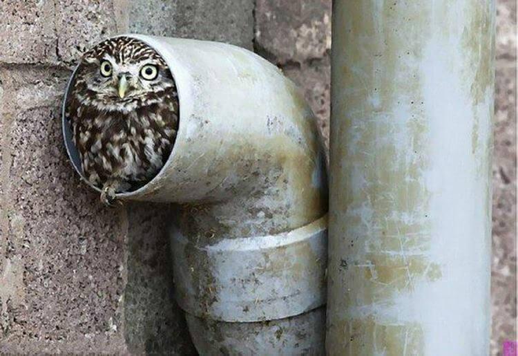 30 фото нелепых и забавных птиц