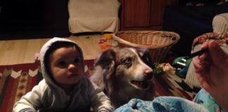 Послушайте, как среагировала собака на малыша, когда родители учили его говорить
