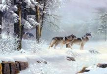 Ролик, покоривший мир: волки с человеческим сердцем