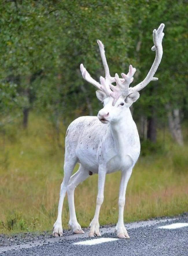 15 необычных, но очень крутых животных