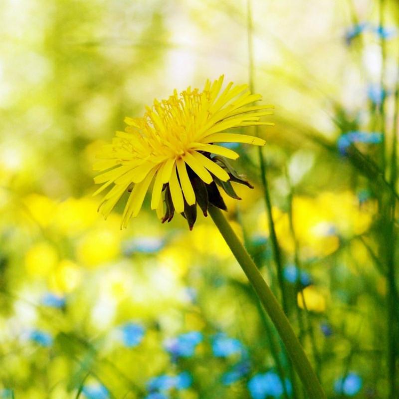 Цветок вашего имени