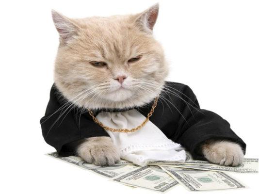 Кот сотрудников маркетинговой фирмы приносит деньги