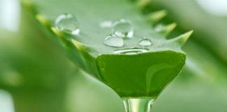Биостимулированный сок алоэ