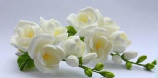 Цветок, соответствующий нашему имени