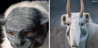 Я 2 года снимал редких вымирающих животных. Жаль, что вы их уже не увидите