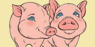 Земляная Желтая Свинья усердно поработает над твоей личной жизнью